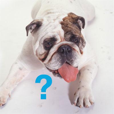 The Scoop: Top 10 Dog Breeds of 2008