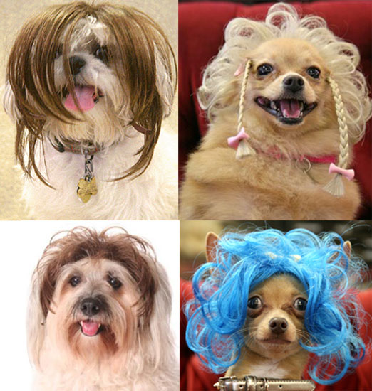 Wiggles Wigs for Dogs: Spoiled Sweet or Spoiled Rotten?