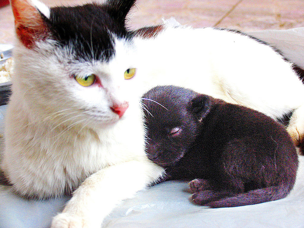 The Scoop: Cat Gives Birth to a Dog!