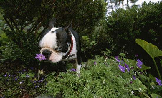 Dog Days of Summer: Just Say No to Cocoa Mulch