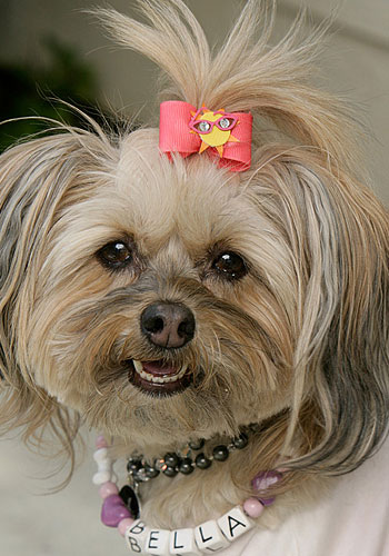 Greatest American Dog: How Did Bella Starlet Dog Get Named?