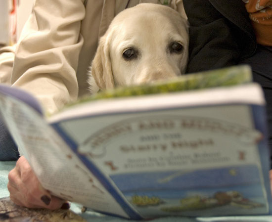 Reader's Choice: What Dog Breed Is the Smartest?