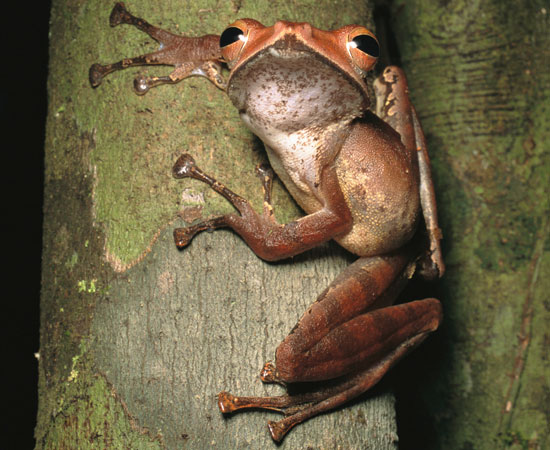 Creature Features: Tree Frogs