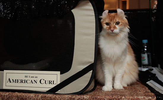 What Do You Know About the World's Largest Cat Show?
