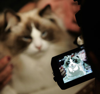 Tune In, Saturday! Animal Planet Premieres Cats 101