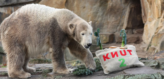 Happy Second Birthday, Knut the Cute!