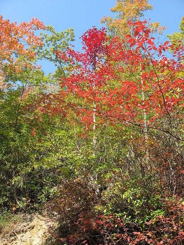 TN Foliage 2008