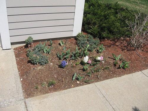 my garden 4/21
