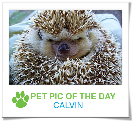 Pet Pics on PetSugar 2009-03-04 09:30:03