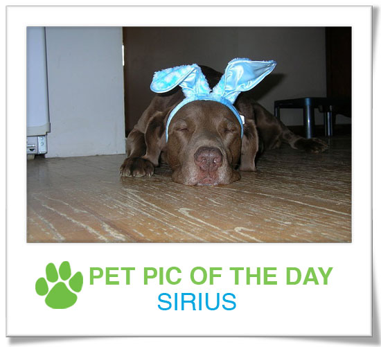 Pet Pics on PetSugar 2009-04-15 09:00:09