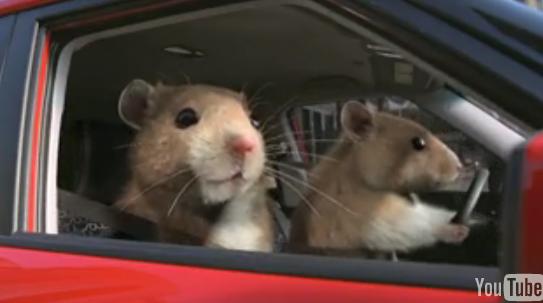 Kia Soul Hamsters Commercial