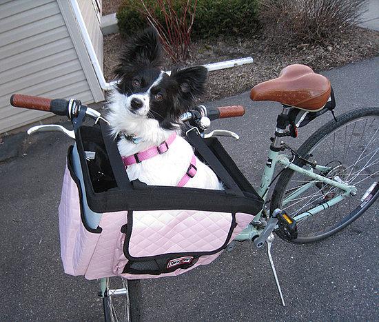 Vesper Goes For a Bike Ride