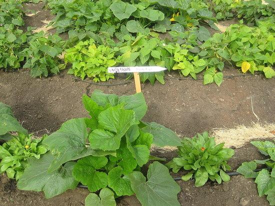Obamas to Plant White House Garden Today
