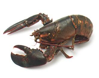 Expert Lobster Rolls