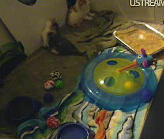 Watch Cute Cat Daphne and Her Kittens