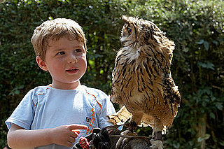 Retro Owl Themed Nursery Decor