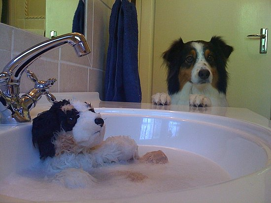 daddy...why is buddy in the sink?