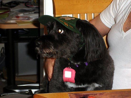 "Bonnie the ""Bark Ranger"""