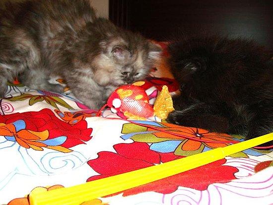 Oreo & Suzie (aka Salt 'n Pepa)