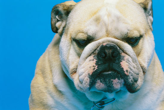 Slentrol, a Weight-Loss Drug for Dogs
