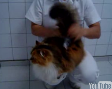 Cat Likes Getting Spanked (Part 2)