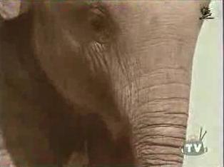 B*tch-Slapped By An Elephant
