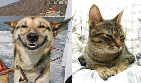 The Difference Between Dogs & Cats