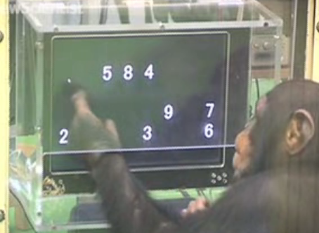 Chimps Outperform Humans in a Memory Test