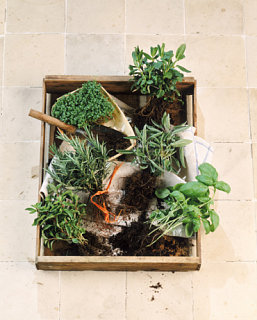 Do You Grow Your Own Herbs/Vegetables?