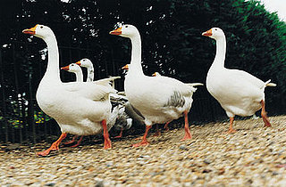 Not Interested in Foie Gras? How About Faux Gras?