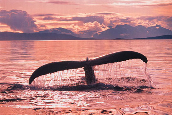 Vote for your favorite whale name at Greenpeace.
