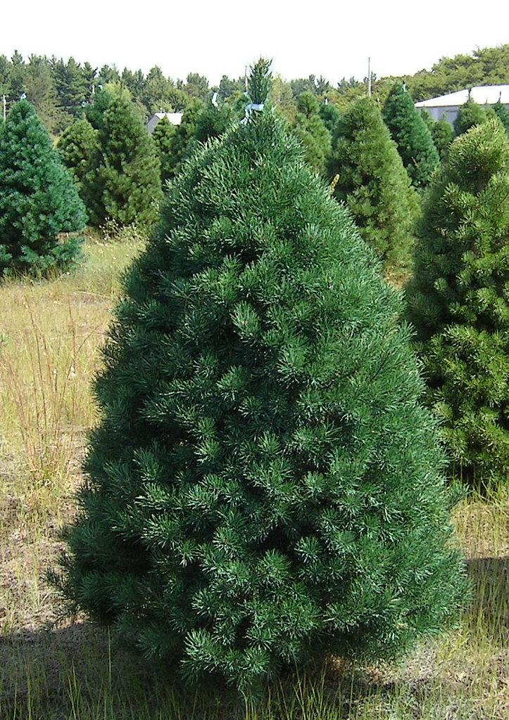 Name This Christmas Tree | POPSUGAR Home