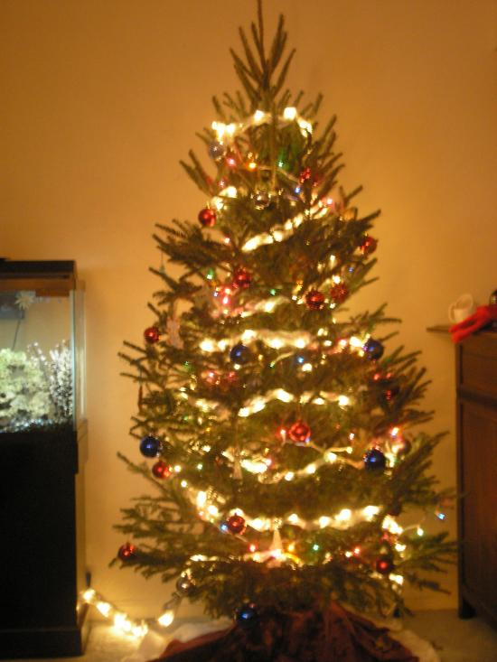 Our Christmas Tree!!