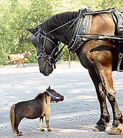 Thumbelina: The World's Smallest Horse