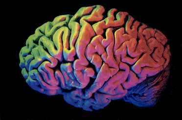 Brain Enhancement Anyone?