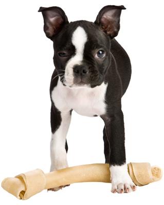 Do Dog Ears Droop When Teething Popsugar Pets