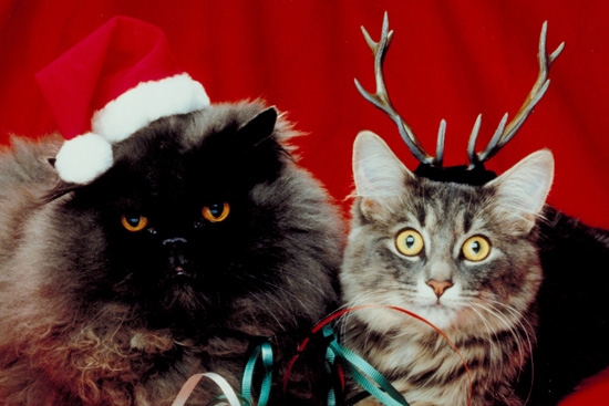 Pictures of Cats in Costume For Christmas | POPSUGAR Pets