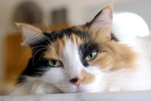 cats not using litter box after surgery