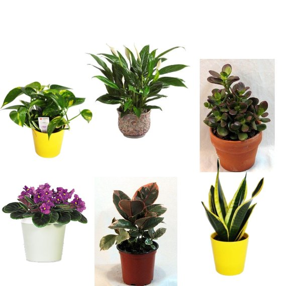 Best plants for the office popsugar smart living Best small office plants