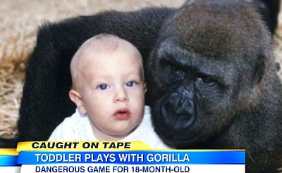 (VIDEO) 18-Month-Old Baby Plays With Gorillas In Controversial Video