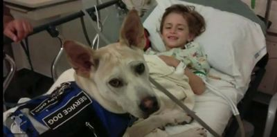 Rescue Dog Changes 6-Year-Old's Life