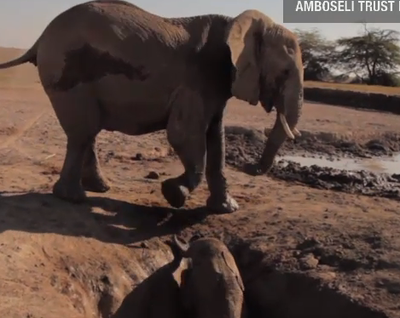 Elephant Calf Rescued From Well (VIDEO)