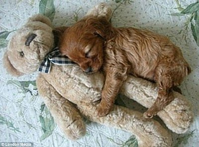 Awwww! Check Out These Cute Sleeping Puppies (PHOTOS)