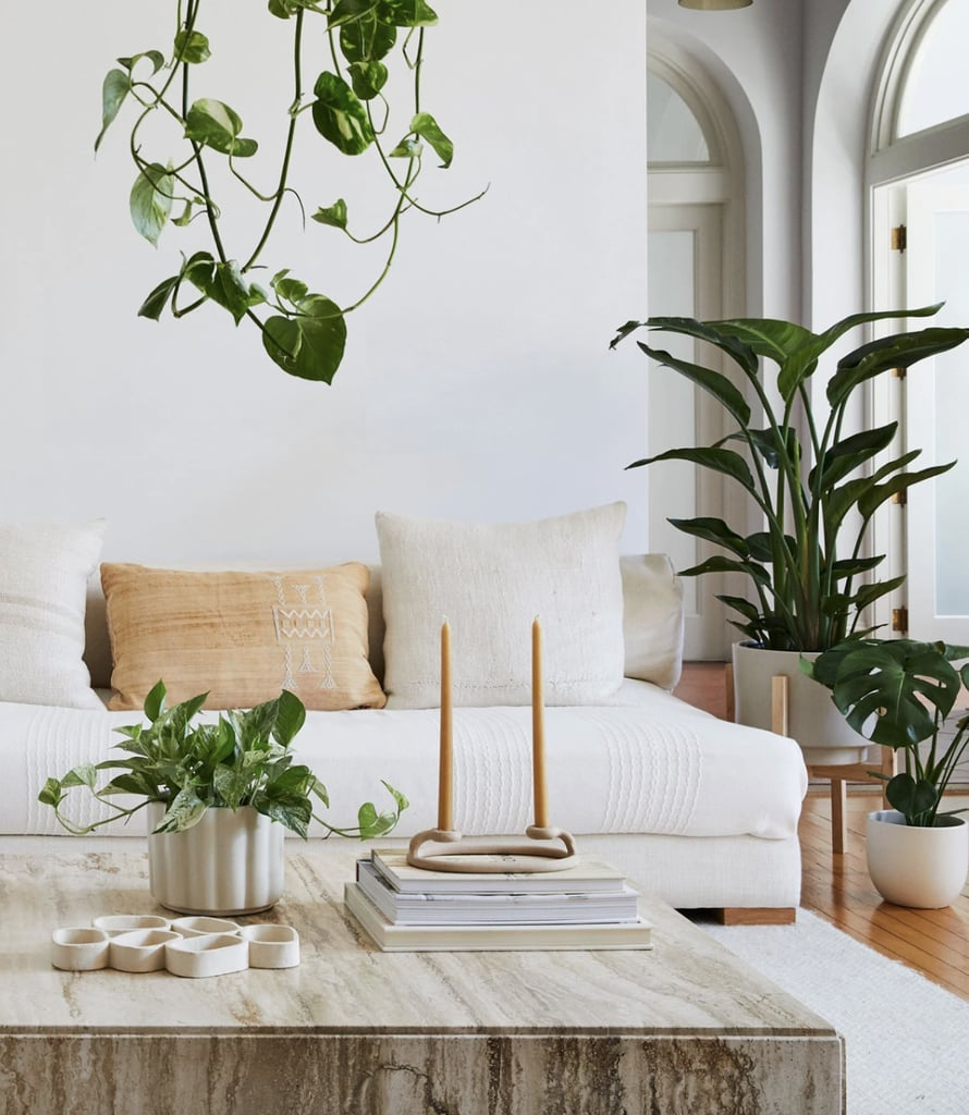 Best Indoor Plants For Bedrooms