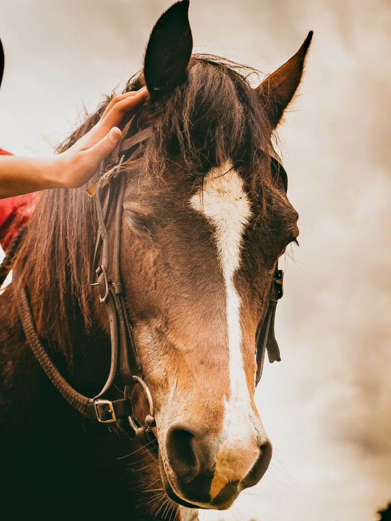 Go horseback riding. Many riding facilities offer free first classes — check your local stables for more info!