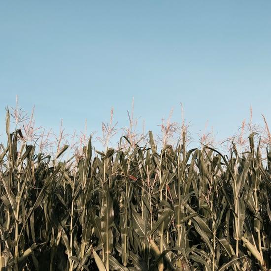 Scariest Corn Mazes in America