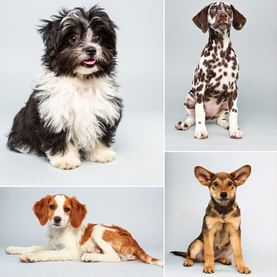 Get Ready to Cheer For the Puppy Bowl X Starting Lineup