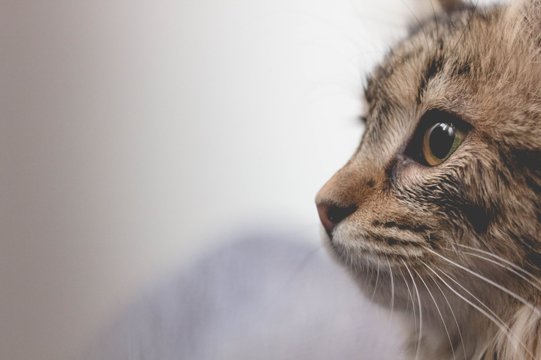 Cute Photos Of Cats And Kittens Popsugar Family
