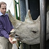 Prince William met Zawadi the rhino before it was released back into the wild in June 2012.