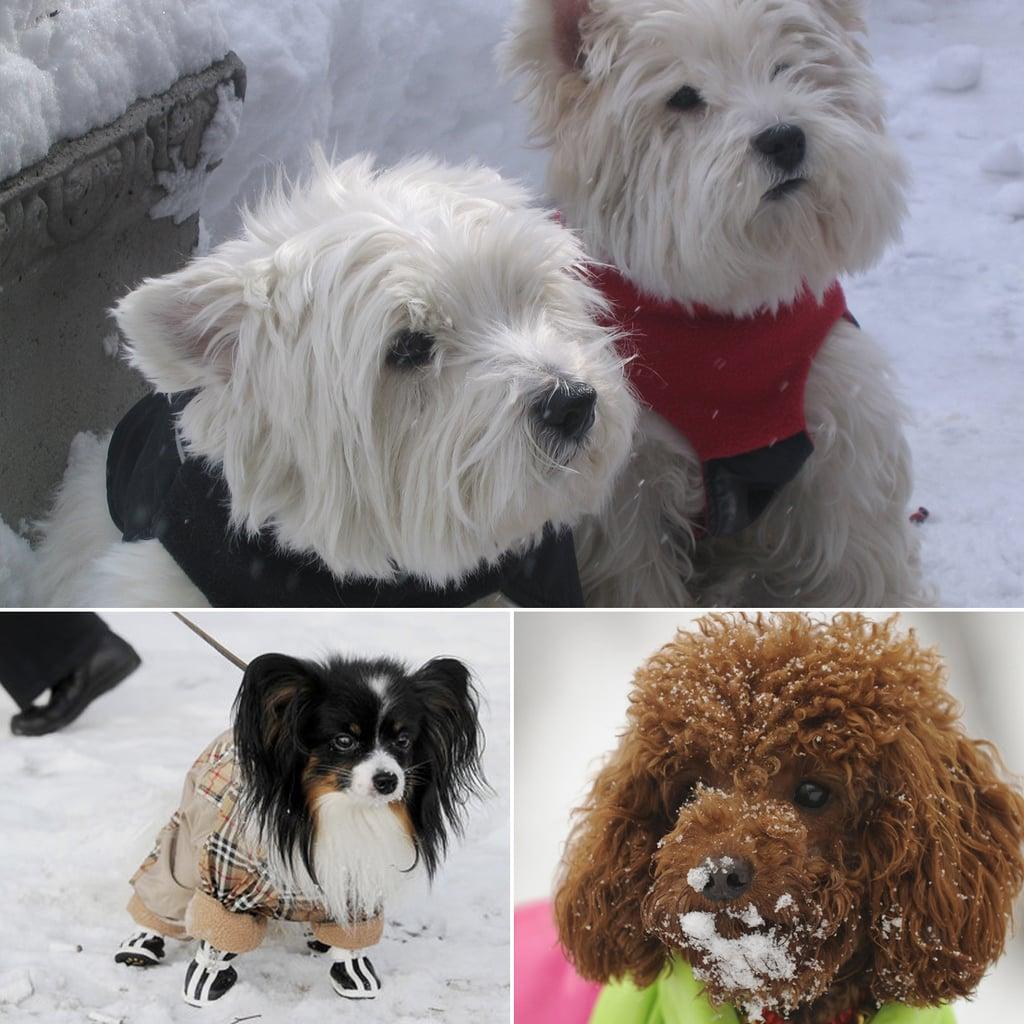 Bundle Up! 8 Dogs Wearing Puffy Coats
